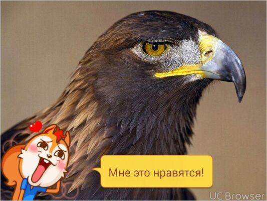 Фото мужчины миша, Москва, Россия, 34
